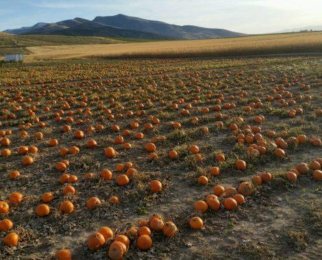 pumpkin-patch-view